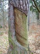 So wurde Öko-Harz vor 1990 gewonnen